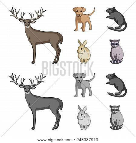 Puppy, Rodent, Rabbit And Other Animal Species.animals Set Collection Icons In Cartoon, Monochrome S