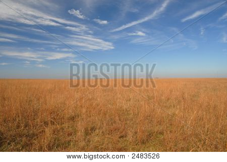 Kansas Fields