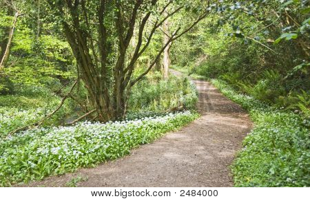 Forest Path With White Flowers