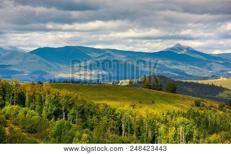 Forested Hills Of Carpathian Mountains. Wonderful Landscape In Early Autumn On A Cloudy Day. Pikui A