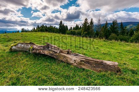 Decaying Log On The Grassy Meadow Near The Forest. Wonderful Landscape In Early Autumn. Borzhava Mou