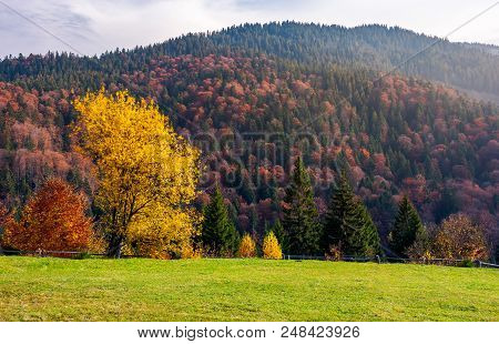 Trees On Grassy Meadow In Autumn. Lovely Scenery Of A Park In Mountainous Area. Red And Yellow Folia
