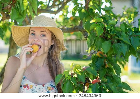 Summertime In Garden. Young Beautiful And Smiling Woman In Garden With Juicy Apricot.