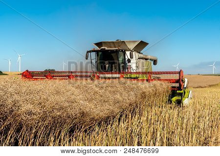 Close View On The Combine Harvesting The Colza