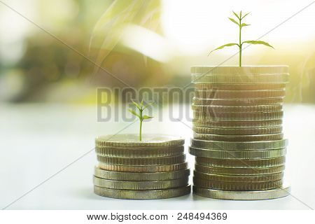 Coin with tree in mutual funds  business concept. poster