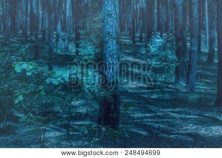 Night Wilderness In A Mysterious Forest With Tall Trees Pure And No One Around Only Wildlife