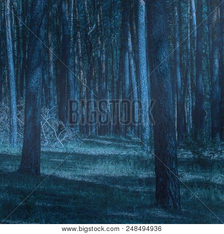 Mysterious Glade In A Night Coniferous Forest With Tall Trees An Exciting Wilderness