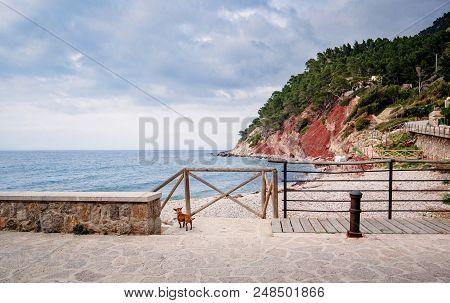 Dog Adimiring The Calm Sea And Clouds Above The Port De Valldemossa In Mallorca Majorca Spain
