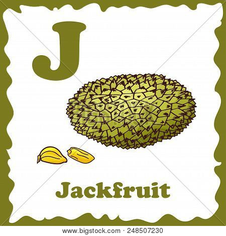 Alphabet For Kids With Fruits. Healthy Letter Abc J-jackfruit.