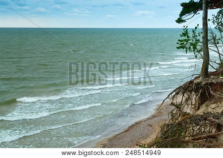 Steep Sea Coast, Overgrown Coast, Baltic Sea Coast