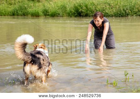 Young Woman Standing In A River And Decoying Her Young Dog, Trainee And Learning