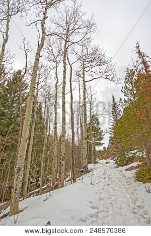 Snow Covered Mountain Trail In Early Spring In Rocky Mountain National Park In Colorado