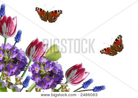 Composition From Spring Flowers And Butterflies