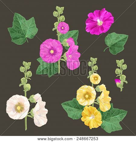 Malva Flowers And Leaves Set. Summer Floral Design With Flowers. Watercolor Blooming Collection For