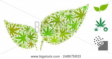 Floral Leaves Composition Of Hemp Leaves In Variable Sizes And Color Tones. Vector Flat Hemp Leaves