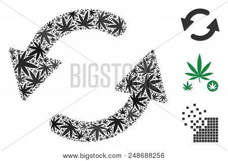 Refresh Ccw Mosaic Of Marijuana Leaves In Different Sizes And Color Shades. Vector Flat Marijuana El