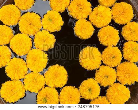 Beautiful Yellow Marigold Flower Floating On Water.