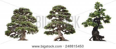 Group Of Tree Isolated On White Background. Bonzai