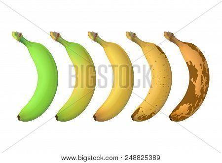 Banana Fruit Ripeness Levels From Green Underripe To Brown Rotten. Vector Set Isolated On White Back