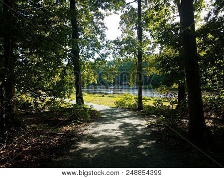 Forest Or Woods With Many Trees And A Lake With Paddleboats
