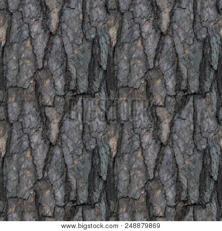 Seamless Pattern Of Old Tree Barque