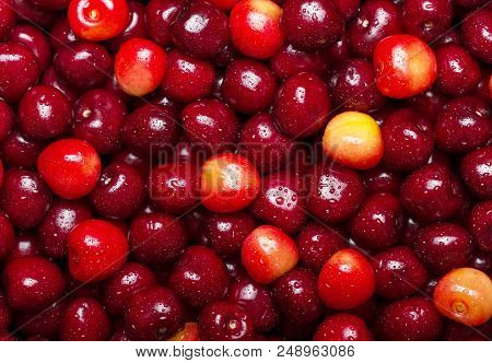 Many Ripe Cherries In Drops Of Water Close-up. Background
