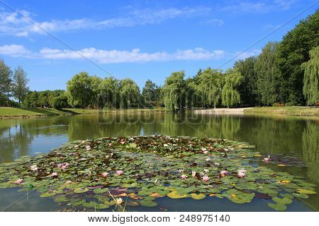 City Public Park Pond In Summer. Scenic View Of Park Pond With Water Lilies.