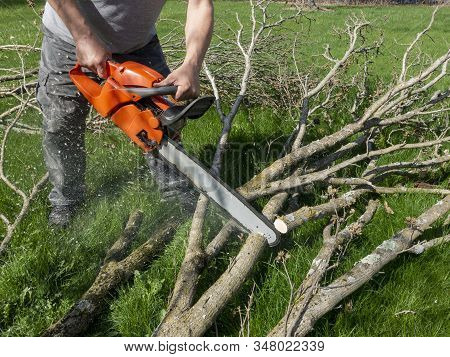 Cutting The Limbs Of A Tree With A Motorized Chain Saw