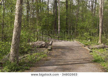 Path and Bridge in Forest