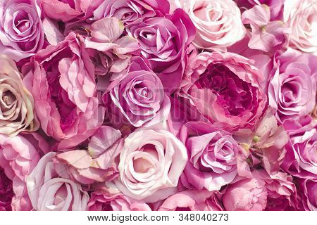 Selective Focus Beautiful Pink Flowers Background . Abstract Soft Sweet Pink Flower Background .beau
