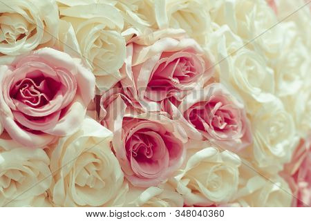 Selective Focus Beautiful Pink Flowers Background . Abstract Soft Sweet Pink  White Flower Backgroun