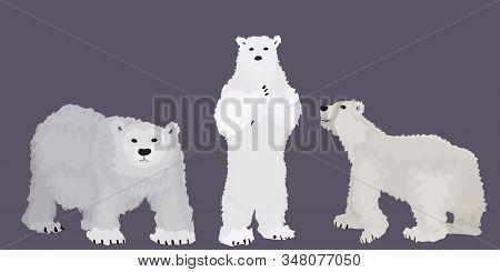 White Bears From The Polar Circle. Cartoon Style