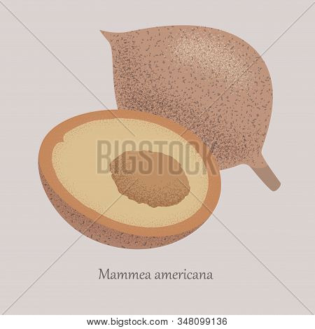Mammea Americana, American Apricot Sweet Tropical Fruit Whole And Half.