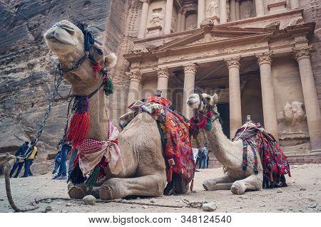 Petra, Jordan - 26 October 2018: Camels In Front Of The Treasury At Petra The Ancient City Al Khazne
