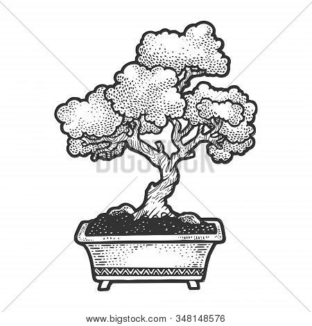 Bonsai Japanese Tree Sketch Vector Illustration. Scratch Board Style Imitation. Hand Drawn Image.