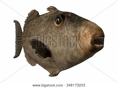 3D Rendering Grey Triggerfish On White