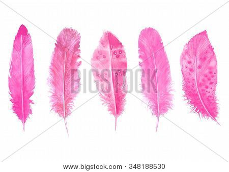 Watercolor Pink Feathers Set Isolated On White. Hand Drawn Watercolour Bird Feather Vibrant Illustra