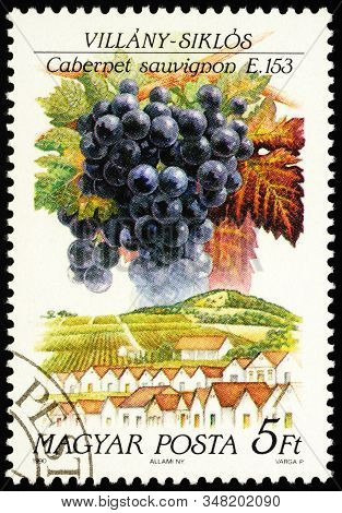 Moscow, Russia - January 30, 2020: Stamp Printed In Hungary Shows Grapes Cabernet Sauvignon, Villany