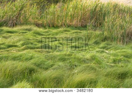 Grass Wetlands