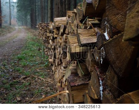 Woodpile In An Autumnal Forest Near A Path