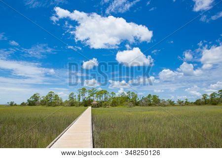 Nature trail through coastal salt marsh in Hunting Island State Park, South Carolina.
