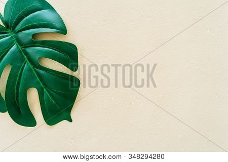 Top View Of Green Nature Tropical Leaf On Fade Pastel Vintage Style Tone Abstract Background.
