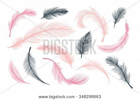 Feathers, Vector Pink And Black Fluffy Quill Plumes Isolated On White Background. Abstract Feathers