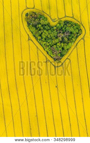 Real Heart Shaped Copse Of Forest Among Rape Field. Nature Love. Valentine Symbol.