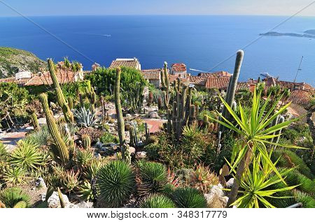 Exotic Cacti Garden At The Very Top Of The Mediaeval Hilltop Village Of Eze, France.
