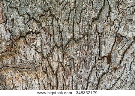 Abstract And Spotty Rough Wood Bark Texture