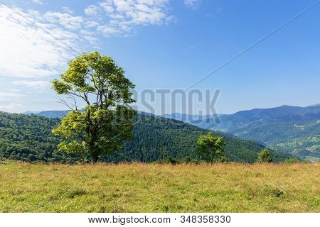 Tree On The Meadow In Mountain Scenery. Beautiful Summer Landscape On A Sunny Day. Wonderful Weather