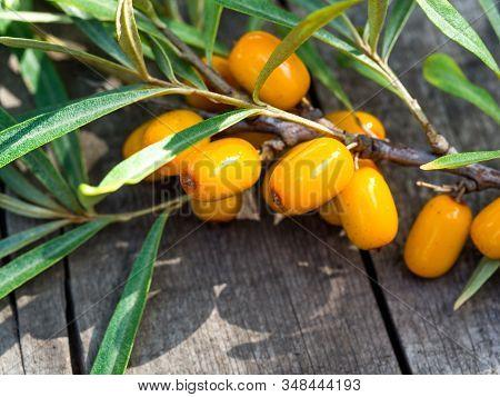 Branch Of Ripe Orange Sea-buckthorn Berries On Rustic Weathered Wooden Table. Hippophae Rhamnoides -