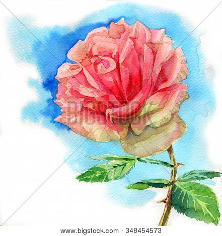 Beautiful Rose Flower, Watercolorpainting Illustration On White Background