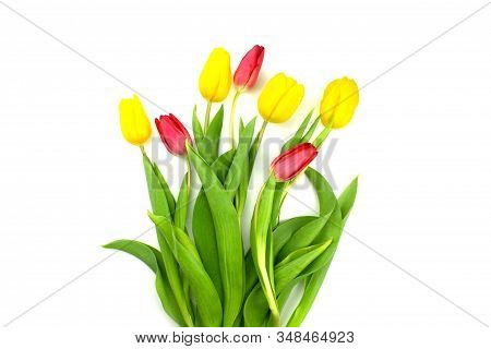Bouquet Of Yellow And Red Tulips Flat Lay Isolated On White Background. Spring Floral Composition La